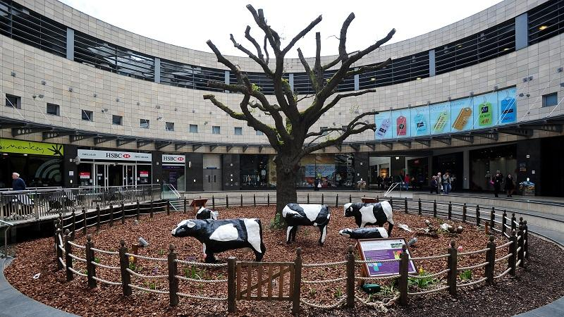 An image of Milton Keynes' concrete cows