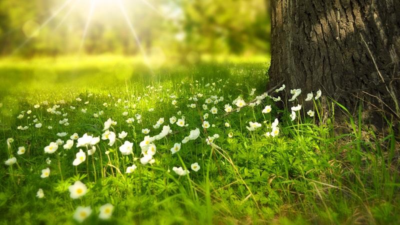 A close-up image of spring flowers and sprouting near a sunlit tree trunk