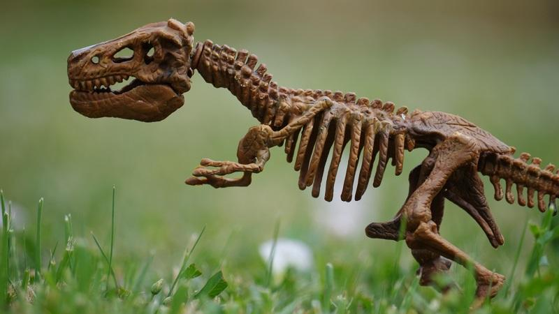 An image of a miniature model of a dinosaur skeleton sitting in grass