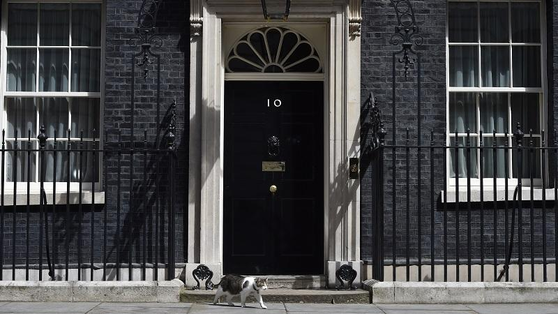 Larry the cat at Number 10 Downing Street