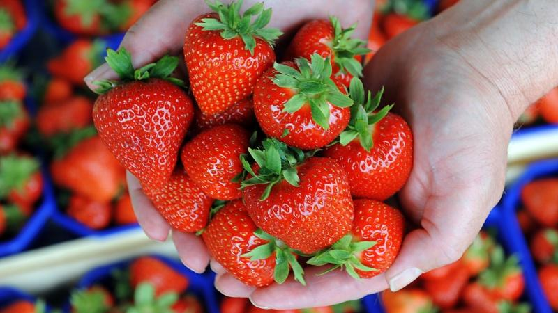 Person's hands holding strawberries